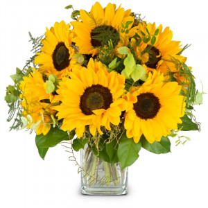 Sonnenblumen pur